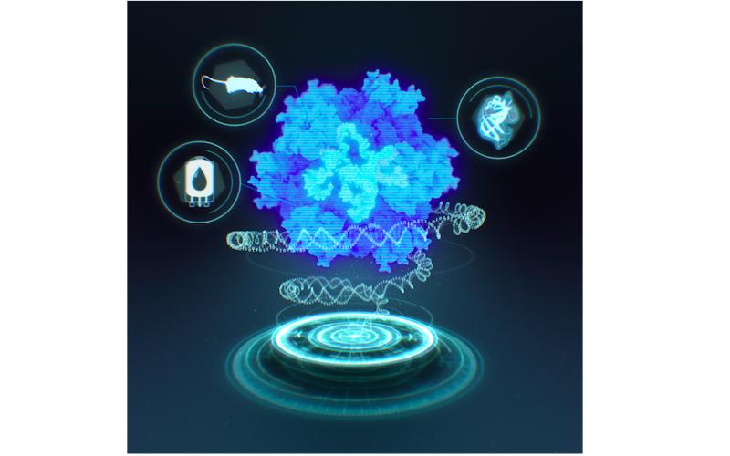 Computationally Designed Synthetic Nucleocapsid