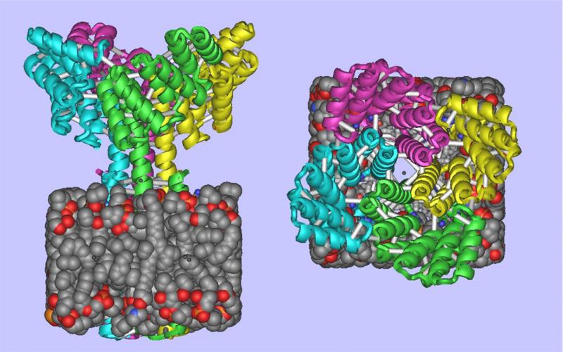 De Novo Design of Membrane Proteins